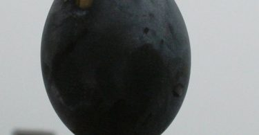 Owakudani black egg