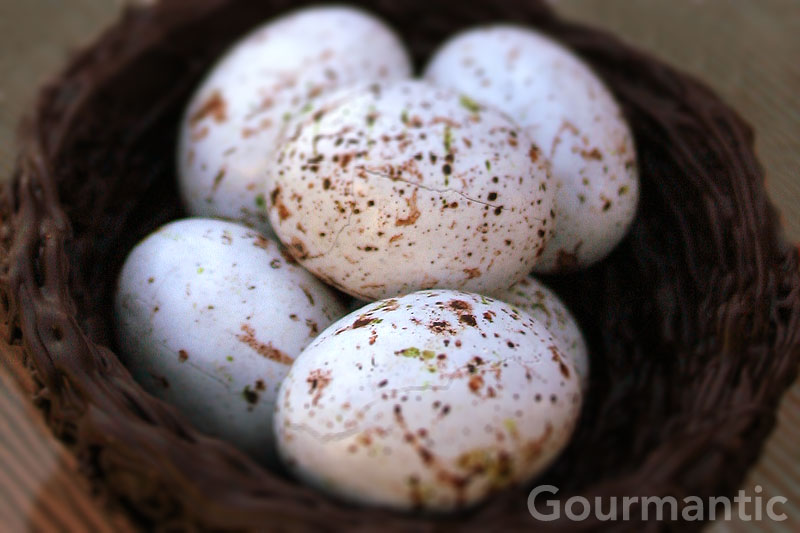 Gull Easter Eggs