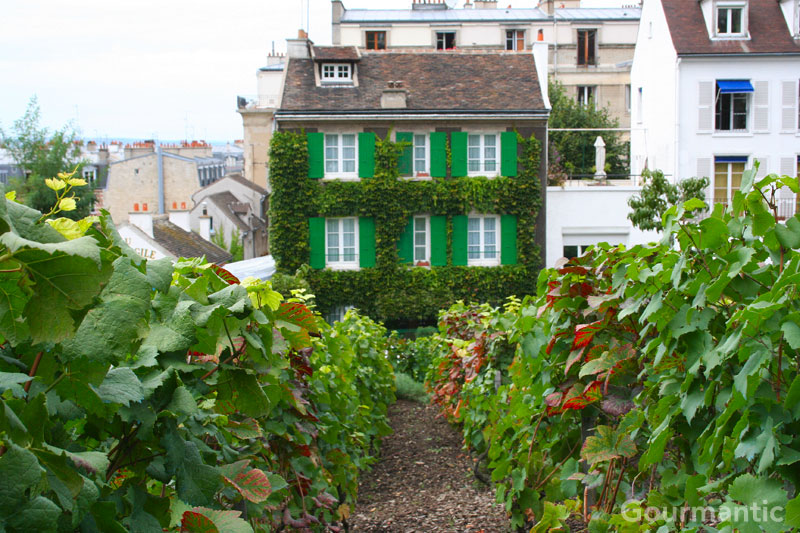 Montmartre Vineyard - Paris
